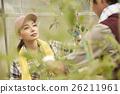 女性 番茄 西紅柿 26211961