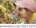 女性 闻 番茄 26211976
