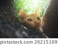 Cute little red kitten on tree 26215109