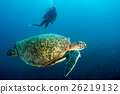 turtle coming to you underwater in cabo pulmo mexico california 26219132