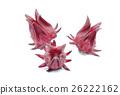 Fresh roselle fruits on white background. 26222162