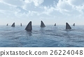 Group of great white sharks 26224048