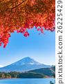 富士山 楓樹 紅楓 26225429
