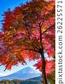 富士山 楓樹 紅楓 26225571