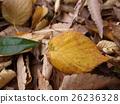 หญ้าแห้ง,ใบไม้ร่วง 26236328
