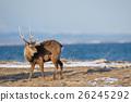 กวาง,สัตว์,ภาพวาดมือ 26245292