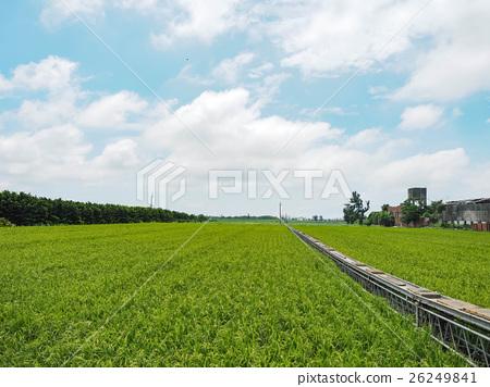 稻田 26249841
