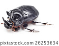 Black beetle isolated on white background 26253634