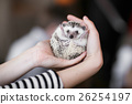 Set. small prickly hedgehog in the hands of people 26254197