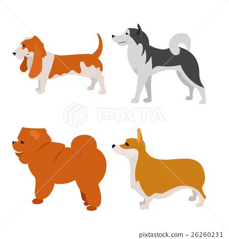 Set of dogs alaskan malamute and basset 26260231