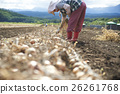 農業形象收穫蔬菜 26261768