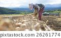 農業形象收穫蔬菜 26261774