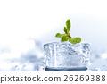 ice mint 26269388