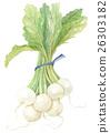 萝卜 块根类蔬菜 小的萝卜 26303182
