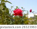 bloom, blossom, blossoms 26323963