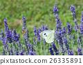 Lavander Flower Polination 26335891