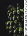 Green Bananas 26340392