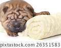 Relaxing Sharpei puppy 26351583