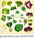 salad vegetable leaf 26354764