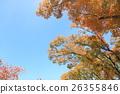 잎, 느티, 나무 26355846