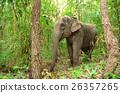 亚洲 大 大象 26357265