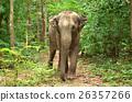 亚洲 大 大象 26357266