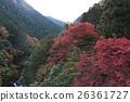 ฤดูใบไม้ร่วงใบไม้ใน Hatonosukekya 26361727