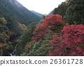 ฤดูใบไม้ร่วงใบไม้ใน Hatonosukekya 26361728
