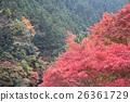 ฤดูใบไม้ร่วงใบไม้ใน Hatonosukekya 26361729