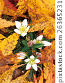 Deciduous leaves and Assembly 26365231