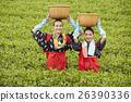 茶葉採摘 茶園 夫人 26390336