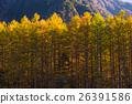 The fall season of kamikochi in Hotaka range 26391586