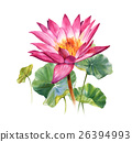 Watercolor  painting of leafs and flower lotus 26394993