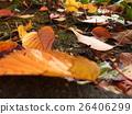 ใบไม้ร่วง,ฤดูใบไม้ร่วง,ผักใบ 26406299