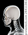 3D illustration of skull - part of human skeleton. 26411361