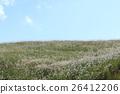 เมล็ดพันธุ์,ฤดูใบไม้ร่วง,ทุ่งหญ้า 26412206