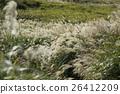 เมล็ดพันธุ์,ฤดูใบไม้ร่วง,ทุ่งหญ้า 26412209