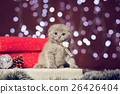 Kitten sitting on a gift box with bokeh background 26426404