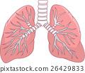 lung human illustration 26429833