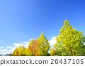 푸른, 하늘, 가을 26437105