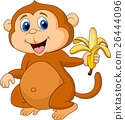 animal, monkey, banana 26444096