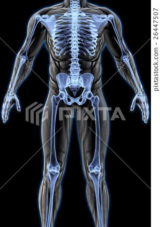 anatomy 26447507