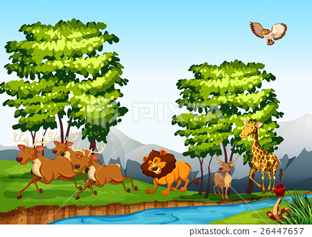 Wild animals in the forest at daytime 26447657