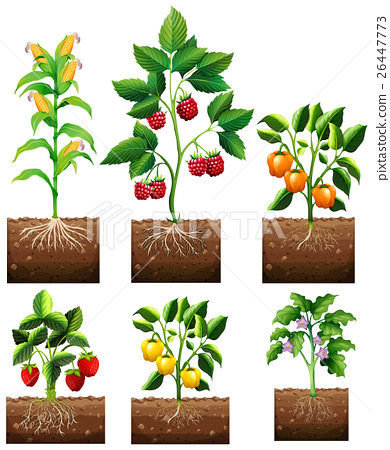 Different kinds of plant in garden 26447773
