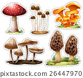 Different types of mushrooms 26447970