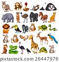 Different types of wild animals on white 26447976