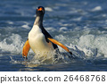 Penguin in the blue waves. Gentoo penguin, bird 26468768