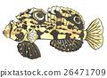 魚圖 26471709