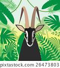 animal, antelope, wild 26473803