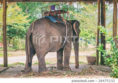 Asian elephant eating green grass 26475132